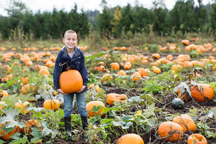 pumpkin patch aldor acres