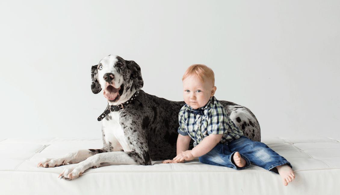 studio family portraits boy and great dane